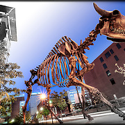 The Descent of Civilization public art implement at 9th and Broadway in Kansas City MO - depicting the skeleton of a bison.