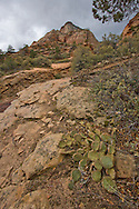 Rock face and cactus, Zion National Park
