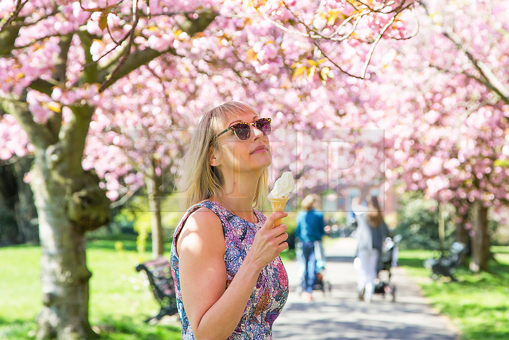 © Licensed to London News Pictures. 21/04/2015.  Local cafe-owner Elizabeth Cooper strolls through the famous avenue of Cherry Blossom in Greenwich Park this morning.  The beautiful cherry blossom on trees in Greenwich Park is much anticipated each Spring and popular with locals and visitors alike . Credit : Rob Powell/LNP