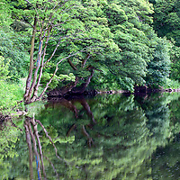 Summer Trees Reflected in the River Wharfe near Burnsall