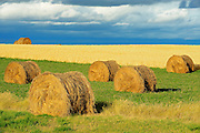BAles and what<br /> near Flowing Well<br /> Saskatchewan<br /> Canada