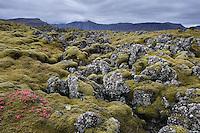 Berserkjahraun lava field in Autumn. Snæfellsnes Peninsula, West Iceland.