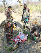 Hadza (or Hadzabe) Hunting party return to the village with a hunted antelope. They butcher and divide the animal between them. Photographed at Lake Eyasi, Tanzania