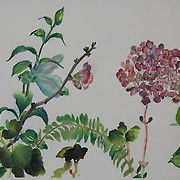 Azaelia, Lily, Hydrangea, Camelia, Cyclamen, Quince, Begonia and Tulip in a playful horizontal composition