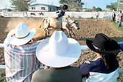 A bull rider loses his hat as he is bucked off a bull during a local area hispanic rodeo at Ranco Laerradura just north of Tulsa, OK.