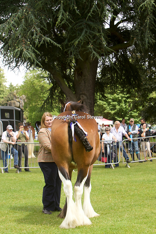 Kate Smith's Brood Mare INGLEBY PEARL          5 years