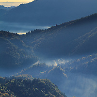 Forest and mist on hillside at Gorenjska, Slovenia