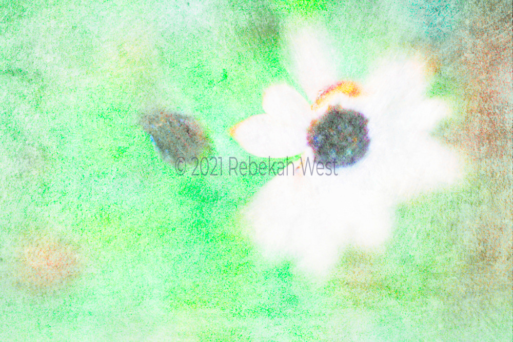 Playful radiant color pencil pastel daisy in supercharged bright green horizontal field, dark colorful center, dark colorful accent mirrors flower center, greenery overlayers and underlayers, greenery, flower art, feminine, high resolution, licensing, iridescent, horizontal, 5333 x 3555