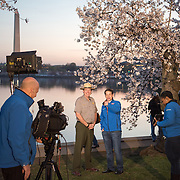 WASHINGTON DC--A TV news crew interviews an NPS ranger about the progress of the cherry blossoms around the Tidal Basin.
