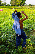 13th August 2014, Shakarpur, New Delhi, India.  Amarjit Singh (11) standing in a field of his parent's market garden puts on his school uniform before attending a makeshift school under a metro bridge near the Yamuna Bank Metro station in Shakarpur, New Delhi, India on the13th August 2014<br /> <br /> Rajesh Kumar Sharma (born 01/02/1970), started this makeshift school in 2011. Six mornings a week he teaches underprivileged children for three hours while his younger brother replaces him at his general store in Shakarpur. His students are children of labourers, rickshaw-pullers and farm workers. This is the 3rd site he has used to teach under privileged children in the city, he began in 1997. <br /> <br /> PHOTOGRAPH BY AND COPYRIGHT OF SIMON DE TREY-WHITE<br /> + 91 98103 99809<br /> email: simon@simondetreywhite.com<br /> photographer in delhi<br /> journalist