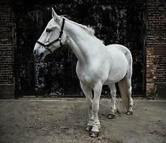 26.05.14 HORSES