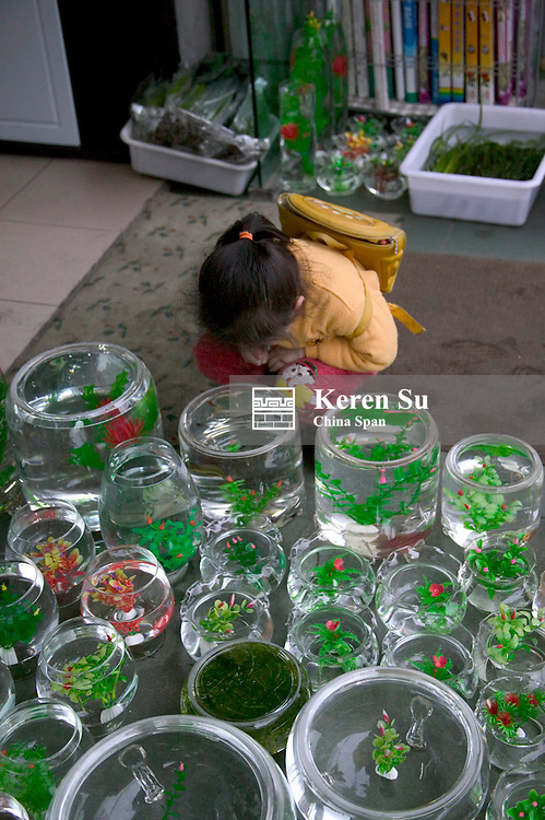 Girl looking at gold fish in glass bowls at the market, Chengdu, Sichuan Province, China