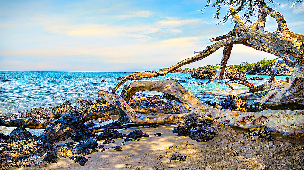 Driftwood on Puako Beach, Hawaii.