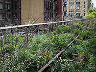 The Highline, a park built on former elevated railroad tracks, running from Ganzevoort street (near 12th street) all the way to 34th street on the West Side of Manhattan.