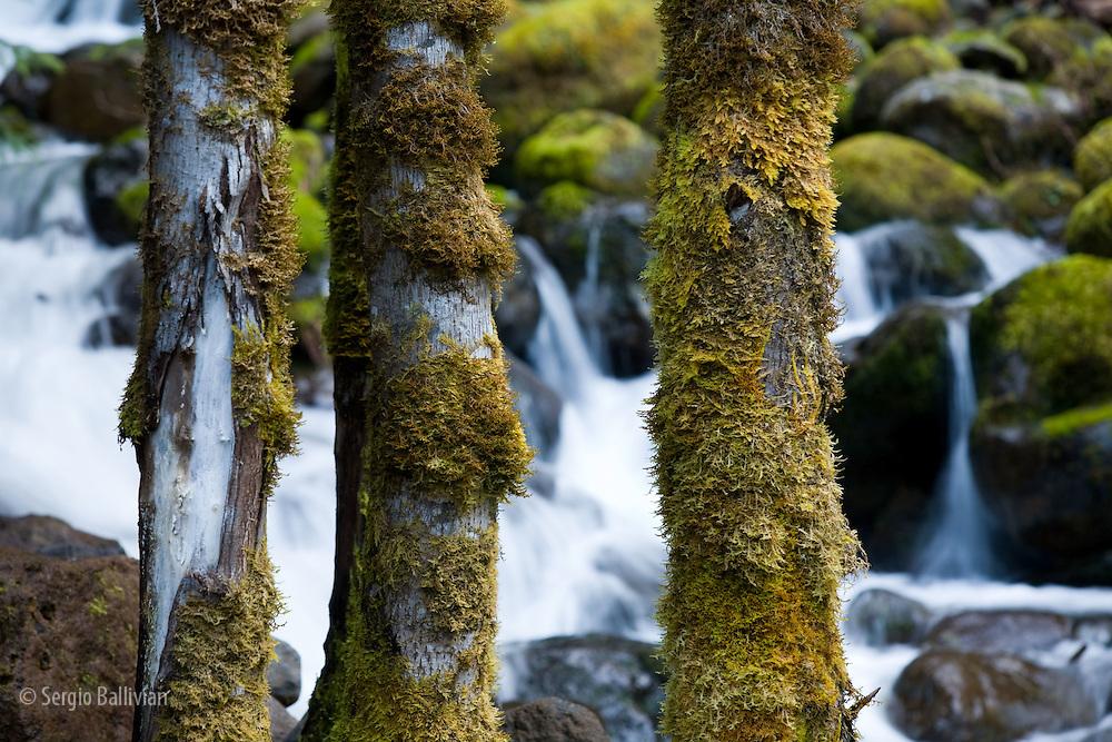 Santiam Silk Creek in Oregon