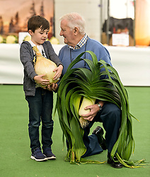 Pictured: Dylan Carmichael (6) from Gourock admires some of the prize-winning vegetables with chairman of the society Arthur Proven.<br /> <br /> Giant vegetables were on show at the world famous Strathclyde Leek & Onion Society annual show, at Cardwell Garden Centre in Gourock. <br /> <br /> © Dave Johnston / EEm