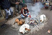 DELHI - Zwerfhonden in de straten van Delhi. ANP KOEN SUYK