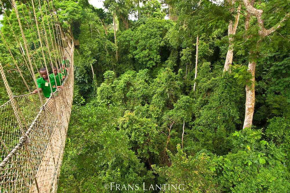Schoolchildren on canopy walkway in tropical rainforest, Kakum National Park, Ghana