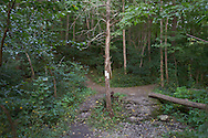 Vernon, New Jersey - At end of the Pochuck Boardwalk section,  the Appalachian Trail enters the woods and continues toward Wawayanda Mountain.