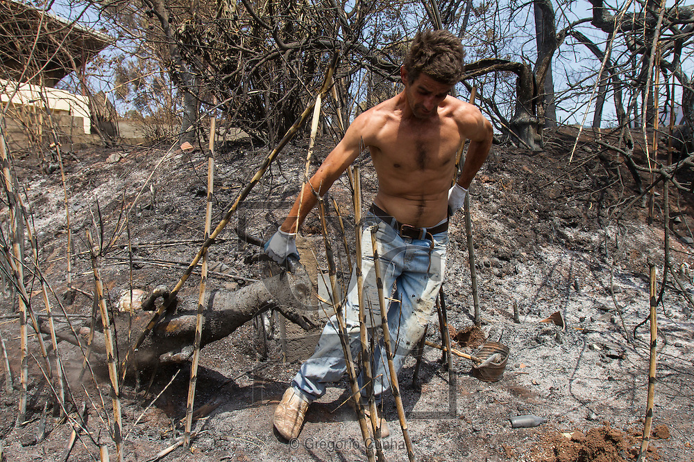 PORTUGAL, Gaula : A villager moves a burned goat in a charred area after a wildfire in Gaula, on Madeira Island, on July 21, 2012. The problems started on July 18 evening when high temperatures and strong winds fanned a fire that broke out on the edge of the capital Funchal. PHOTO / GREGORIO CUNHA