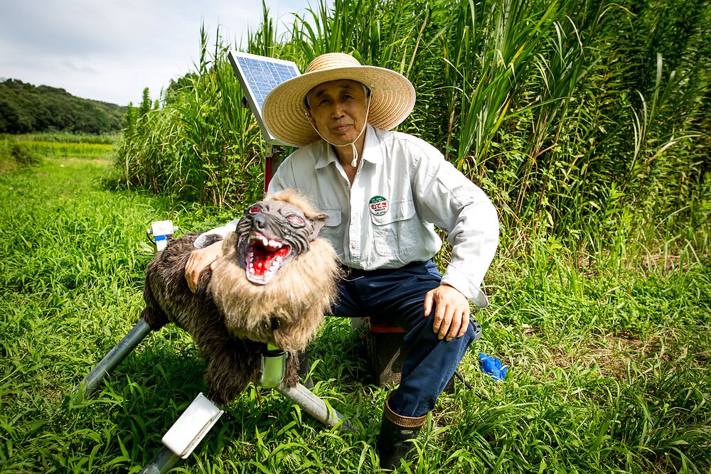 "CHIBA, JAPAN - AUGUST 10:  Chikao Umezawa, head of JA Kisarazu-shi, posed for a photo beside a robot named ""Super Monster Wolf"", a solar powered robot designed to scare away wildlife from farmer's crops in Kisarazu, southwestern Chiba Prefecture, Japan on August 10, 2017. Wolf Bot uses an infrared ray sensor when wild animals approach. It begins to intimidate wild animals by flashing red LED lights from its eyes on and off and blaring 48 repeated different types of loud sounds. (Photo by Richard Atrero de Guzman/NUR Photo)"