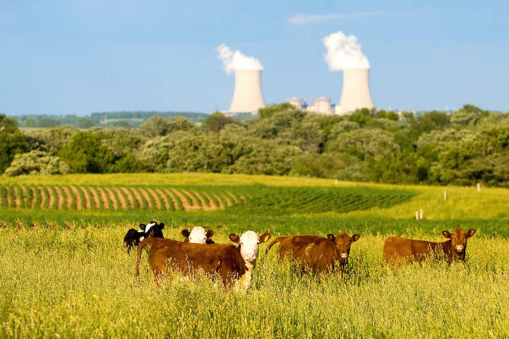 Cattle graze in late afternoon light as in the distance, the cooling towers of the Byron Nuclear Power Plant emit steam into the northern Illinois air.