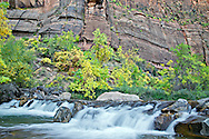Cascades on the Virgin River, Fall Colors, Zion National Park
