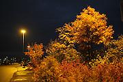 Autumn Hamar