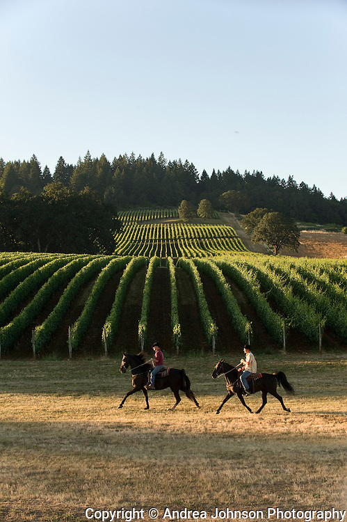 Equestrian Wine tours through Oregon's Dundee Hills area wineries and vineyards, Willamette Valley, Oregon