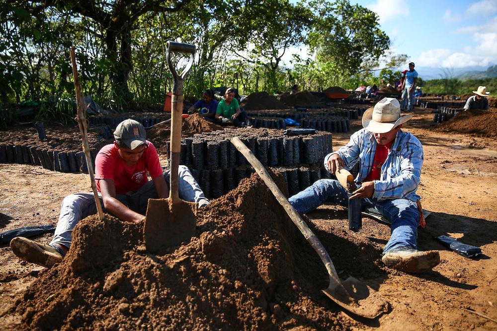 Seeds are packed into soil bags in the Jaltenango coffee tree nursery in Chiapas, Mexico. (Joshua Trujillo, Starbucks)