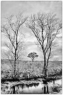 infrared image of trees framing tree in field near canal at Pocosin Lakes NWR