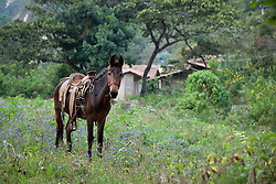 """Horse in San Sebastian"" - This horse was photographed in the small mountain town of San Sebastian, Mexico."