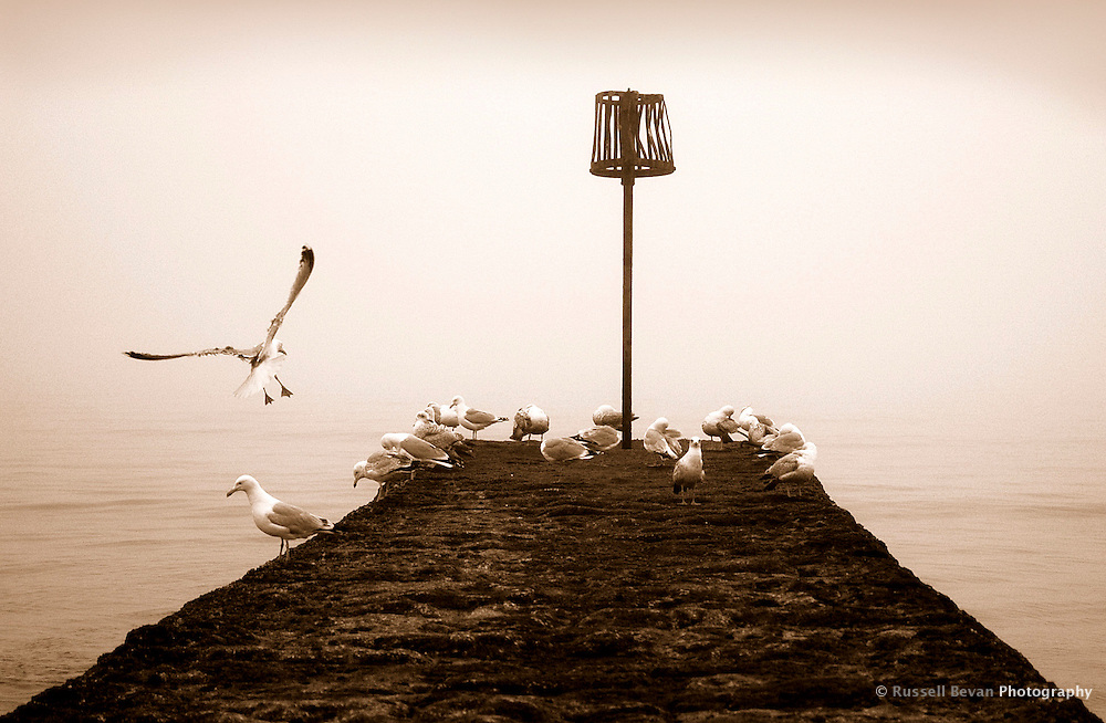 Sea Gulls in Dawlish, UK - Sepia