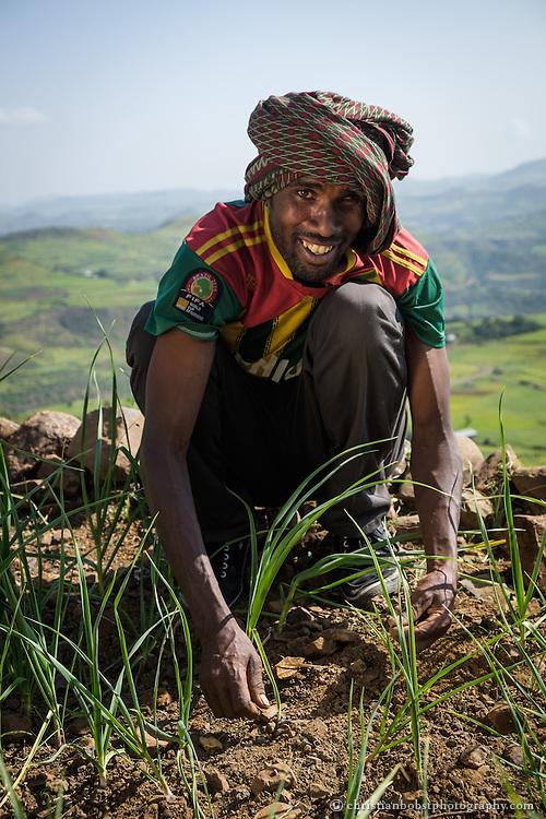 Wag Hemra, Bench terracing and intensive hillside Farming, Desta Kassa (30) is weeding a garlic field in the bench terasses