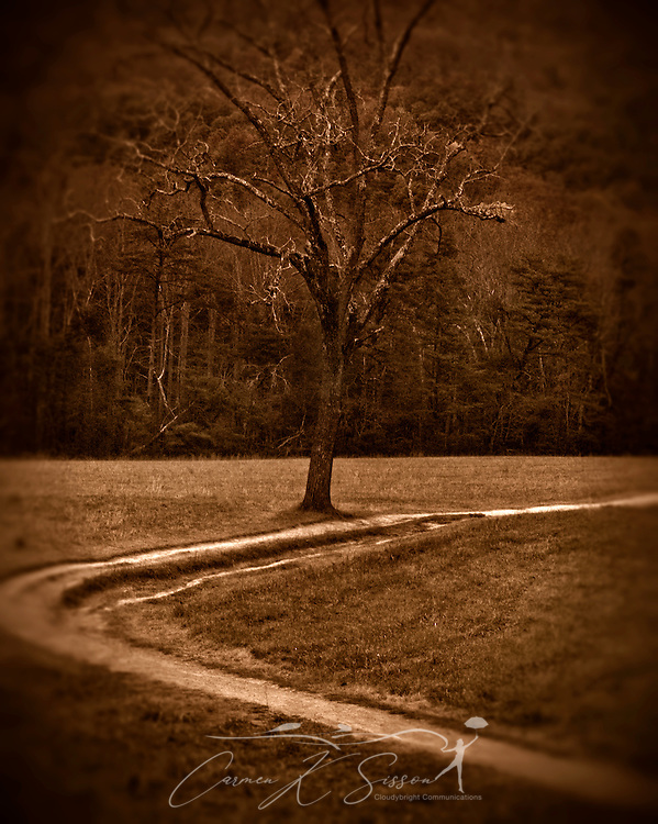 A dirt trail leads to a tree in Cades Cove, a popular destination within the Great Smoky Mountains National Park. (Photo by Carmen K. Sisson/Cloudybright)