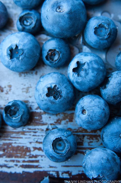 Close up photos of u-pick blueberries