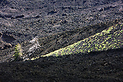 Italy, Sicily, Etna Vegetation grows in the cool lava