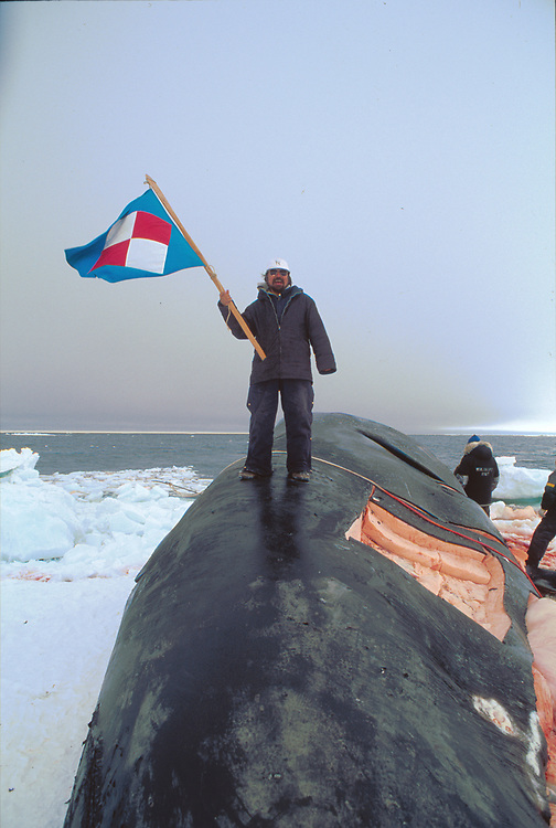 Alaska . Barrow . Captain Charles Hopson and his whale .