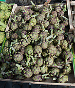 """Rennes, FRANCE. General View GV. Rennes weekly regional market. Brittany,<br /> <br /> """"Artichokes, on display"""", sold from stalls in the open and covered market  <br /> <br /> Saturday  26/04/2014 <br /> <br /> © Peter SPURRIER, <br /> <br /> NIKON CORPORATION  NIKON D700  f7.1  1/200sec  24mm  3.9MB"""