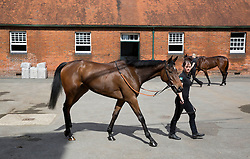 Two of the Queens race horses, Micras and Enliven (background) which are in training at Park House stables,Kingsclere,Berkshire Thursday, 10th April 2014. Picture by i-Images