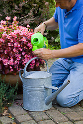Adding liquid feed to a watering for feeding plants in containers or grow bags. High potash liquid fertilizer