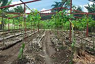 Cultivo Organico Vaquilla