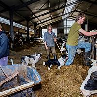 Nederland, De Rijp, 30 maart 2017.<br />Biologische boerderij van Leyntje Melse (l)<br />Een aantal koeien moet naar de slacht en daarmee is de boerin het niet eens.<br />Op de foto: Leyntje Melse, haar zoon Nick (r) en haar man Evert.<br /><br /><br /><br />Foto: Jean-Pierre Jans