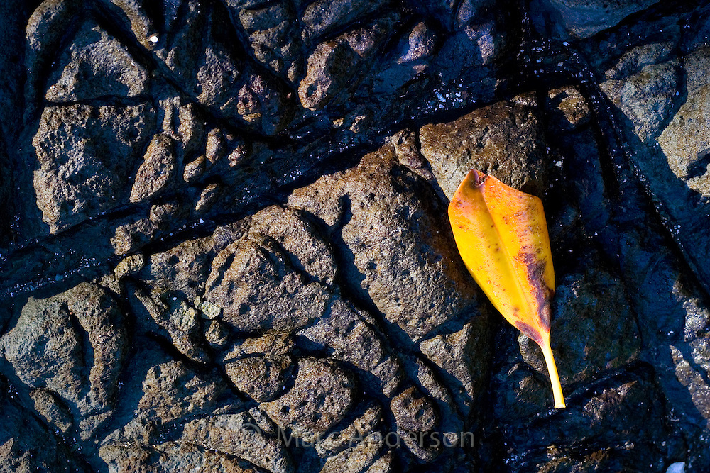 An orange leaf and the detail and patterns in lava rock on a tropical island in Fiji.
