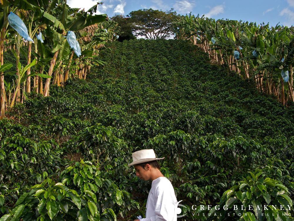 Coffee Plantation -Zona Cafeteria - Colombia