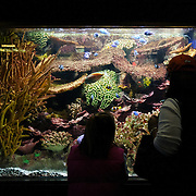 A mother and daughter are silhoutted against the illuminated tank at the National Aquarium in Washington DC. The National Aquarium is in the basement of the Department of Commerce Building, where it has been housed since 1932. Much smaller and less well known than its affiliated facility in Baltimore, Washington's National Aquarium consists of a series of tanks illustrated various types of marine environments, with special emphasis on the many marine sanctuaries in U.S. marine territory.