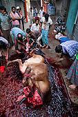 Eid Al Adha in Bangladesh