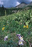 Rocky, San Juans, Yankee Boy Basin, Mount Sneffles, Colorado