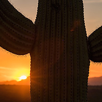 16 - Saguaro National Park