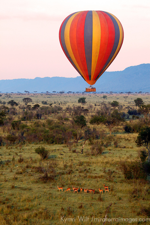 Africa, Kenya, Maasai Mara. Hot-Air Ballooning over wildlife of the Maasai Mara.